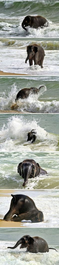 baby elephant being frisky on the beach
