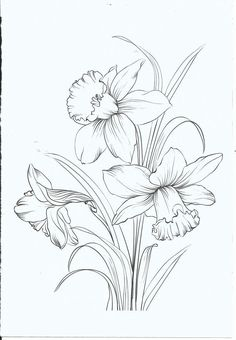 Latest Free Narcissus plant Thoughts Long-lived daffodils are some of the best to cultivate in addition to hottest planting season its he Pencil Drawings Of Flowers, Flower Sketches, Art Sketches, Art Drawings, Drawing Flowers, Doodle Flowers, Arte Latina, Daffodil Tattoo, Daffodil Cake
