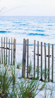 beach grass// paradise // wanderlust