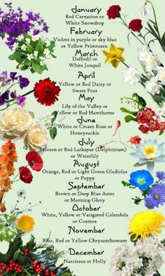 Discover the birth month flowers and flower meanings here! Discover the birth month flowers and flow Birth Month Flowers, September Birth Flower, April Birth Flower, December Flower Tattoo, Flowers For Each Month, October Flowers, Flower For June, August Birth Month Flower, Birth Month Colors