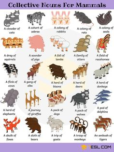 Useful Collective Nouns For Animals in English - 7 E S L Animal Group Names! Learn useful list of collective nouns for animals (turkeys, owls, crows,.) with example sentences, video and ESL printable worksheets. English Writing Skills, Learn English Grammar, English Vocabulary Words, Learn English Words, English Phrases, English Idioms, English Language Learning, English Lessons, Teaching English