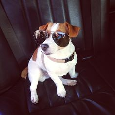 How cute is Milo in my shades? - @Candice Swanepoel