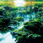 Stunning Highlights from the 2016 International Aquatic Plants Layout Contest
