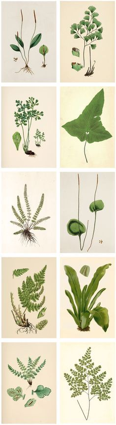 Free printable plant illustrations   The Painted Hive