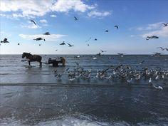 Paardevissers #odk