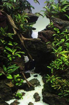 . Freshwater Aquarium Plants, Saltwater Aquarium, Planted Aquarium, Freshwater Fish, Aquarium Fish, Salt And Water, Fresh Water, Terrarium, Fish Aquariums