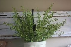 my favorite greenery, 2 and free shipping