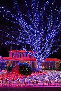 red and blue outdoor christmas light displayin fact never seen this color combo anywhere else love the way the two colors mingle at certain spots and