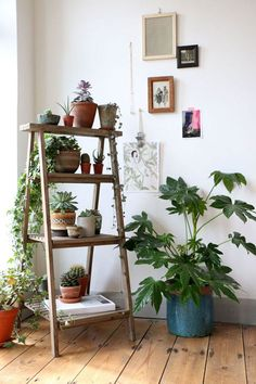 Estante tipo escalera en A con macetas de cactus, suculentas y plantas trepadoras.
