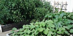 Organic Garden Fertilizers . Garden Fertilizers, Organic Fertilizer, Organic Gardening, Garden Club, Home And Garden, Edible Garden, Plants, Organic Farming, Vegetable Gardening