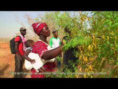 WEST AFRICA SPECIAL: Watch – Green Treasure of the Sahel | CIFOR Forests News Blog
