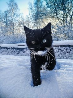 Country Kitten in Snow.