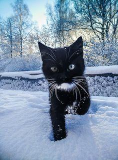 Snowcat♡