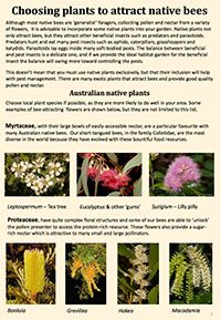 Awesome native bee resources and info on gardening for bees.lChoosing plants to attract native bees. Bee Attracting Flowers, Bee Friendly Flowers, Stingless Bees, Flowers Australia, Carpenter Bee, Fruit Plants, Flower Gardening, Garden Styles, Livestock