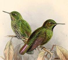 Bird Design, Hummingbirds, Animals, Pets, Animales, Animaux, Animal, Hummingbird, Animais