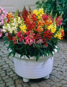 Растения для контейнеров