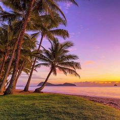 Palm Cove, North Queensland.