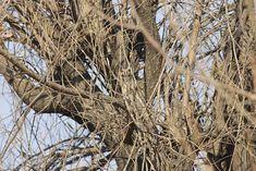 buho entre ramas