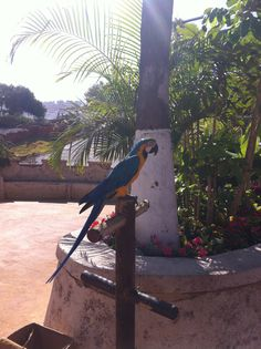 Parrot on holiday