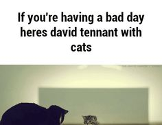 If you're having a bad day heres david tennant with cats