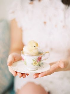 Is there anything more darling than a fluffy chick in a teacup?