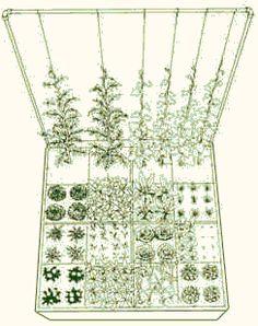 Square Foot Gardening - Trellis Gardening