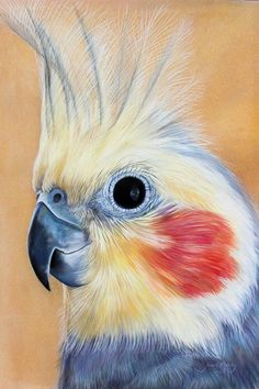 Joanne Barby Artist (With images) Bird Pictures, Pictures To Paint, Bird Drawings, Animal Drawings, Watercolor Animals, Watercolor Paintings, Parrot Drawing, Caran D'ache, Bird Artwork