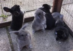 look at all those BUNNIES