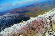 Overnight snow and ice are icing on top of fall color in the NC Blue Ridge Mountains near Asheville