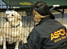ASPCA | ASPCA responds to Sandy - Support storm relief for animals. Donate Today!