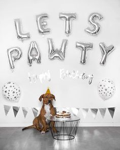 Dog birthday ideas inspiration celebrations and photography lets pawty! puppy puppybirthday dog birthday pawty partyeight top 21 easy and fun ideas with glowing sticks Dog First Birthday, Puppy Birthday Parties, Puppy Party, Animal Birthday, Happy Birthday, Birthday Ideas For Dogs, Birthday Cake, Birthday Nails, 10th Birthday