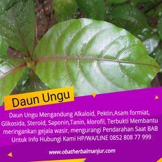 Tawk to salep wasir Wordpress Org, Herbalism, Plant Leaves, Education, Twitter, Plants, Faces, Planters, Training
