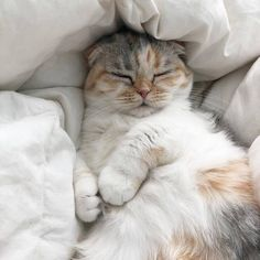 cat aesthetic Why do cats look so comfortable when - cat Cutest Animals On Earth, Animals And Pets, Baby Animals, Funny Animals, Cute Animals, Funny Cats, Cute Kittens, Cats And Kittens, Fluffy Kittens