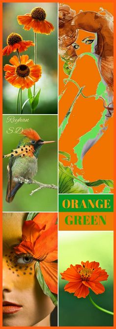 '' Orange & Green ''by Reyhan S.D. Beautiful Collage, Beautiful Images, Wall Papers, Color Stories, Color Pallets, Green And Orange, Color Trends, True Colors, Mood Boards