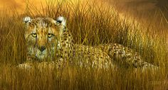 Cheetah - In The Wild Grass art by Carol Cavalaris.