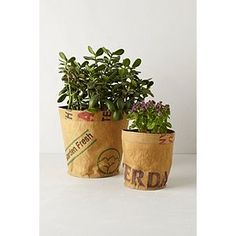 Reclaimed Tea Sack Planter