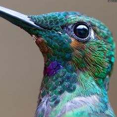 Gaze deeply into a hummingbird's eye. These pictures are AMAZING | While on a recent trip to Costa Rica, photographer Chris Morgan captured these stunning close-up images of humming birds.