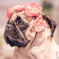 ..when Frida Kahlo would be a pug...