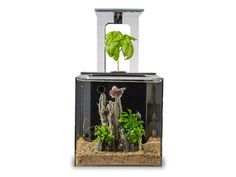 EcoQube C Aquarium: Become a Fish Parent Without Ever Having to Clean the Tank with This Ingenious, Cost-Saving Aquarium