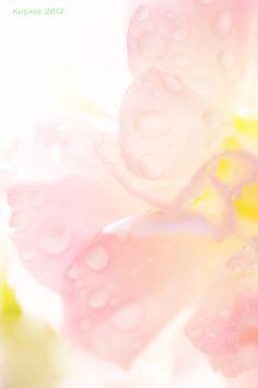 ⭐ pink yellow Q316