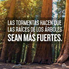 The Storms make the Tree Roots  stronger / Le tempeste fanno in modo che le radici degli alberi siano più forti / Las tormentas hacen que las raíces de los árboles sean más fuertes