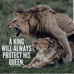 the king and I the queen la protezione che certe persone riescono a trasmetterti Badass Quotes Best Quotes Aigle Animal Lion Quotes Lion And Lioness Lion Love Motivational Quotes Inspirational Quotes Warrior Quotes Badass Quotes, Best Quotes, Aigle Animal, Lion Quotes, Lion And Lioness, Lion Love, Warrior Quotes, Queen Quotes, Big Cats