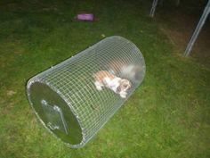 Hampster Wheel for Bunnies. Sort of. Put it outside and they can nibble the grass while they run amok.