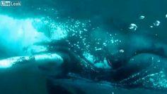 Sorpendente encuentro de un fotógrafo submarino con una ballena jorobada