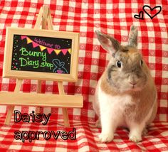 Daydreaming Bunny mini notebook by BunnyDiary on Etsy
