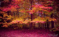 20 Lebanon Images Great Places Lebanon New Hampshire,Pumpkin Spice Syrup For Coffee