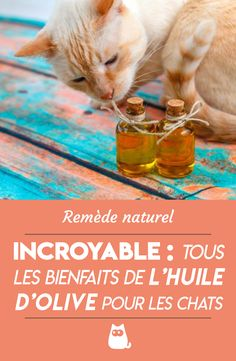 Olive oil has several properties for cats: explanations and some bonus recipes! Cute Baby Animals, Animals And Pets, Beauty Hacks Skincare, Post Animal, Diy Stuffed Animals, Neko, Puppy Love, Olive Oil, Pet Dogs