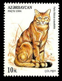 African wildcat - 1994 stamp of Azerbaijan Vintage Stamps, Vintage Cat, Postage Stamp Art, Stamp Catalogue, Here Kitty Kitty, Stamp Collecting, I Love Cats, Cat Art, Cat Lovers