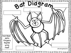 math worksheet : 1000 images about bats! on pinterest  stellaluna and vampire bat : Bat Math Worksheets