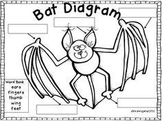 Classroom Ideas Owls And Bats On Pinterest Owl